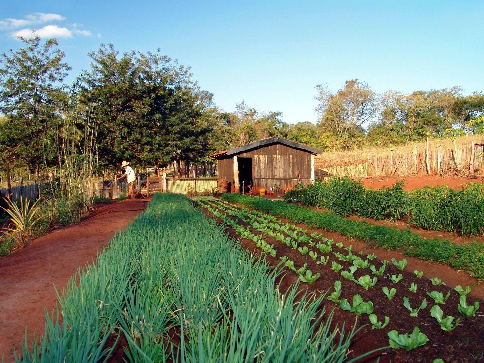 Sector primario definici n qu es y concepto economipedia - Casas rurales norte de portugal ...
