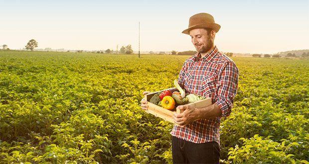 joven agricultor en el campo recolecta