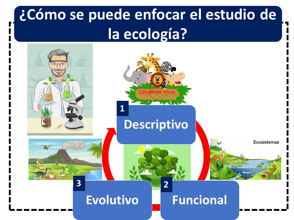 Cómo Se Puede Enfocar El Estudio De La Ecología