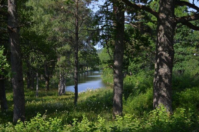 Oro Verde Bosques Suecos