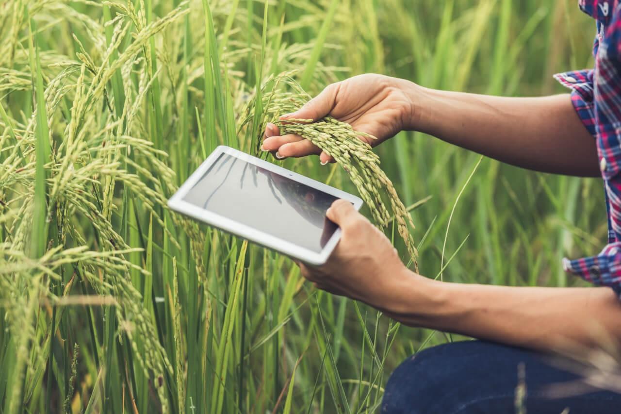 Tecnologias Mejoran La Agricultura Organica